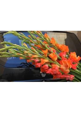 9 оранжевых Гладиолусов