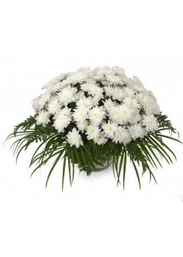 Корзина из 51 белой кустовой хризантемы