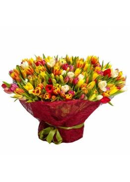 201 тюльпан